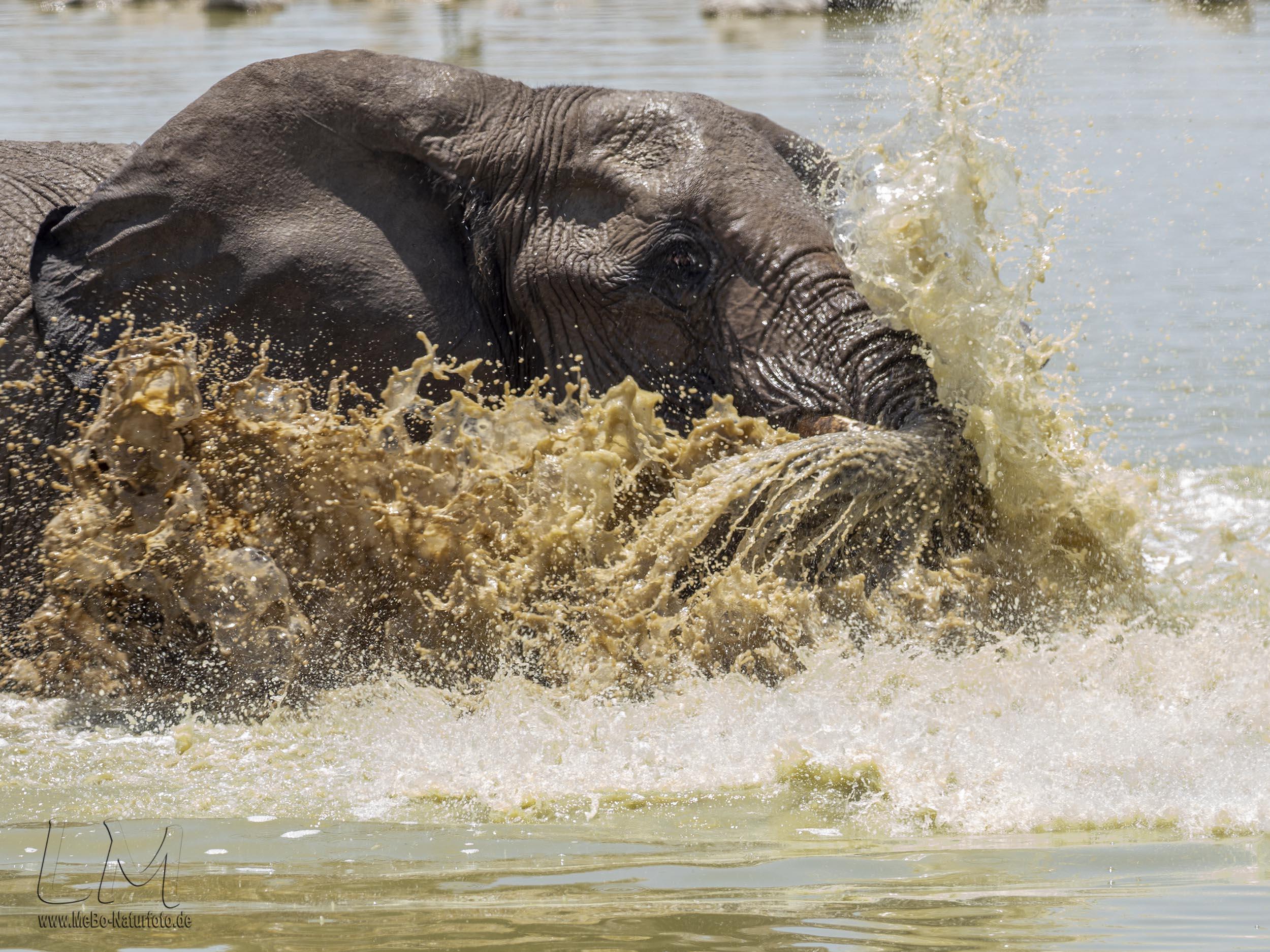 vermutlich nur für Elefanten nicht infektiös