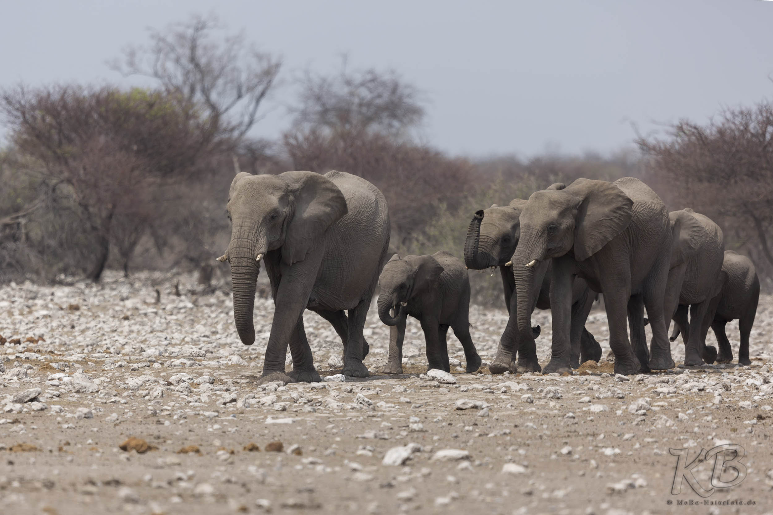 Elefanten im Erindi Game Reserve
