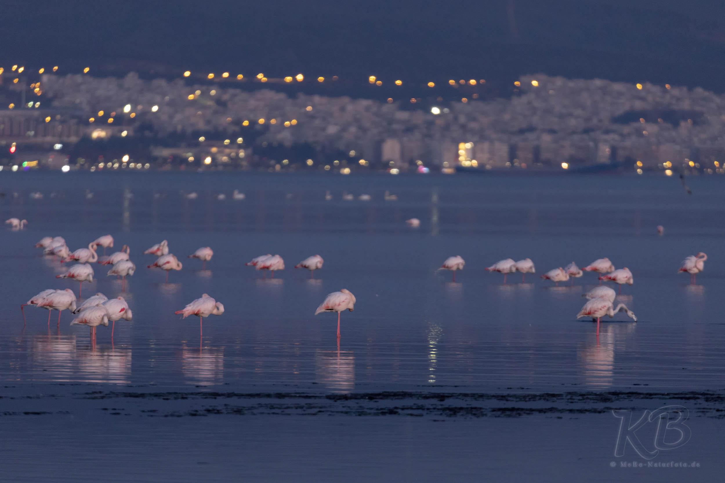 Schlafende Flamingos vor der Kulisse von Thessaloniki