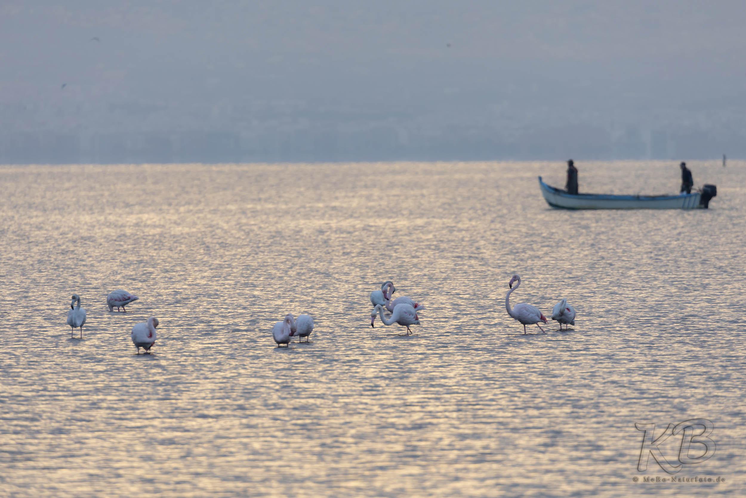 Rosaflamigos und Fischer in der Bucht vor Thessaloniki