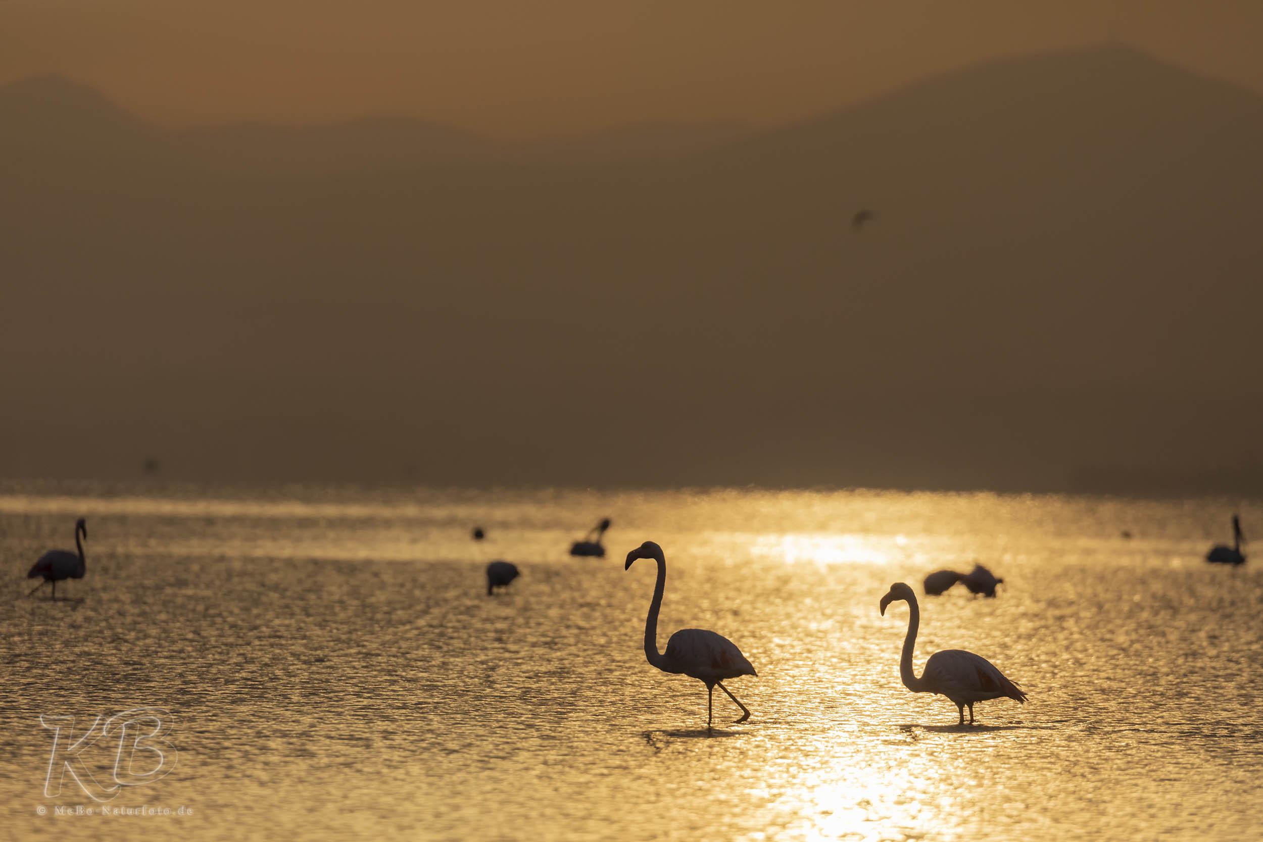 goldene Flamingos
