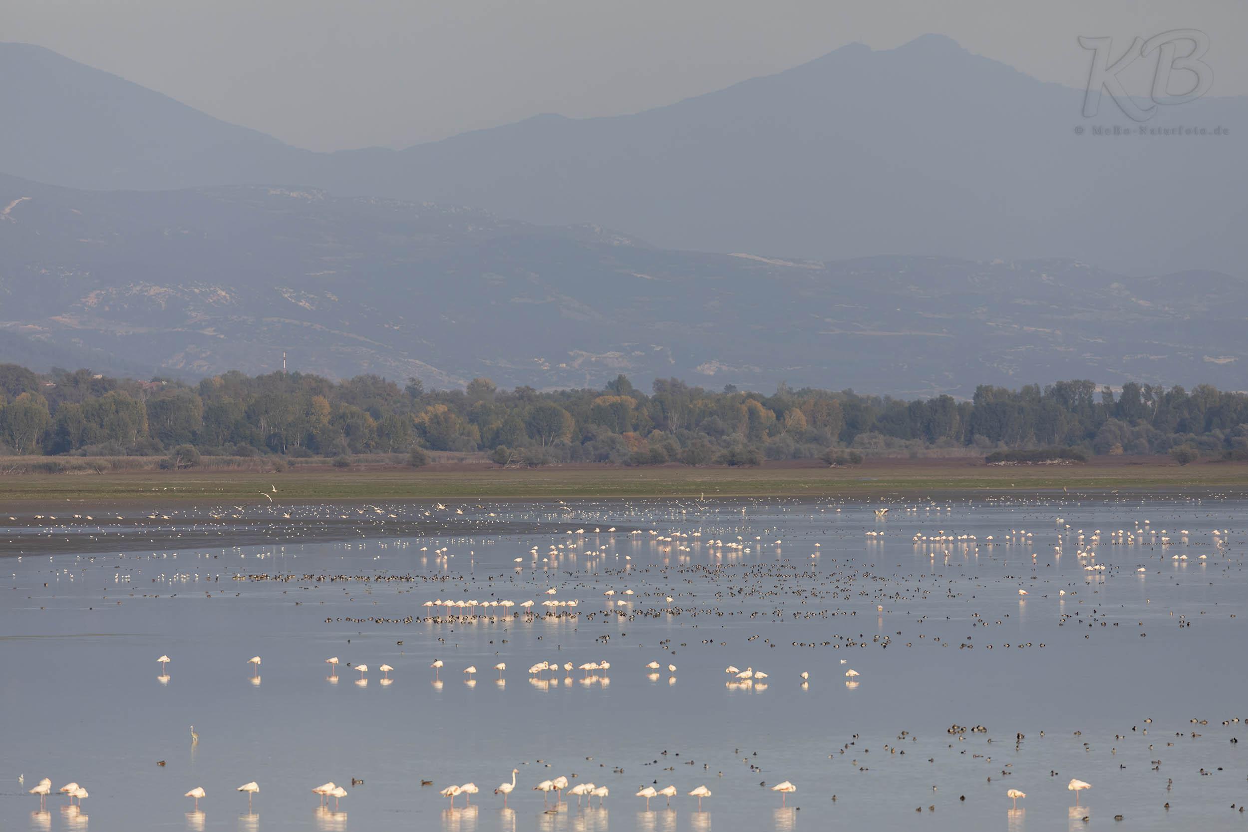 Wasservögel am Kerkinisee