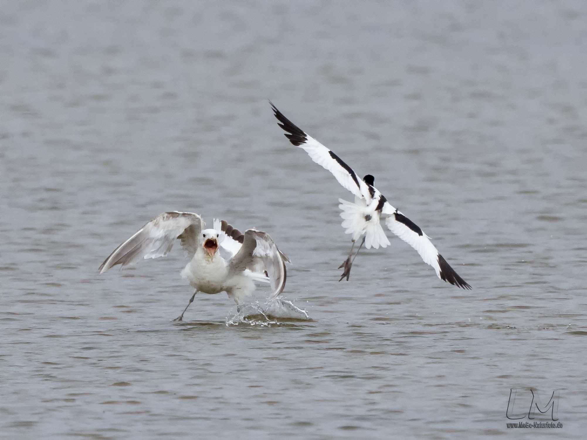 La réserve ornithologique baie de Somme Grand-Laviers