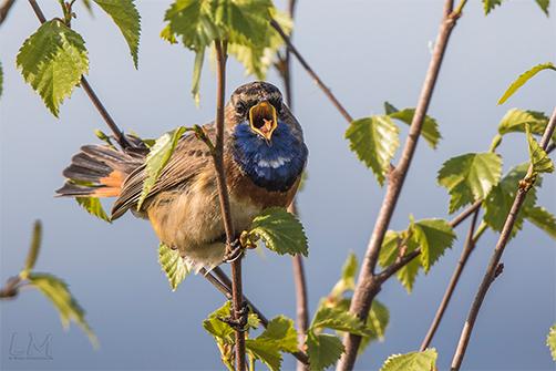 Sperlingsvögel