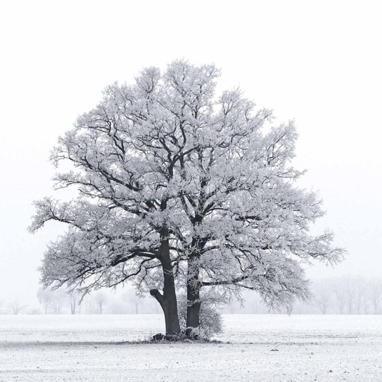 2017 – 01 Winter-Landschaft